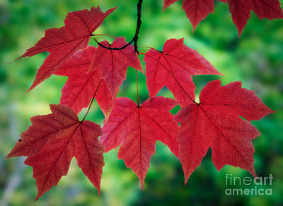 Red And Green Art Print by Inge Johnsson