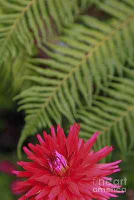 Photograph - Red And Green by Kelly Morrow