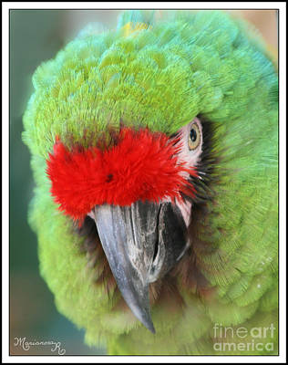 Photograph - Red And Green Parrot by Mariarosa Rockefeller