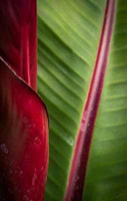Photograph - Red And Green by Roger Mullenhour