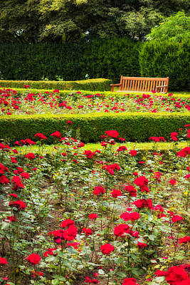 Photograph - Red And Green Rose Garden by Matthias Hauser