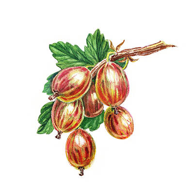 Sour Painting - Red And Happy Gooseberries by Irina Sztukowski