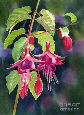 Red And Purple Fuchsias With Background Art Print