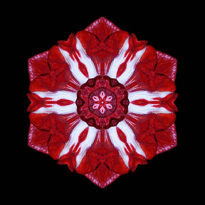 Photograph - Red And White Amaryllis Iv Flower Mandala by David J Bookbinder