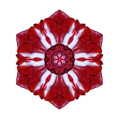 Photograph - Red And White Amaryllis Iv Flower Mandala White by David J Bookbinder