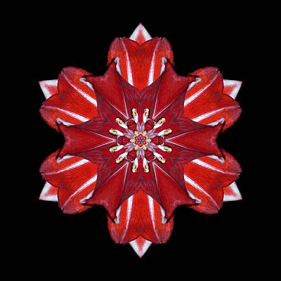Photograph - Red And White Amaryllis Vii Flower Mandala by David J Bookbinder