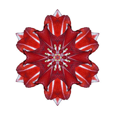 Photograph - Red And White Amaryllis Vii Flower Mandala White by David J Bookbinder