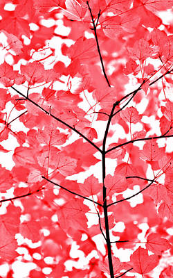 Photograph - Red And White Leaves Melody  by Jennie Marie Schell