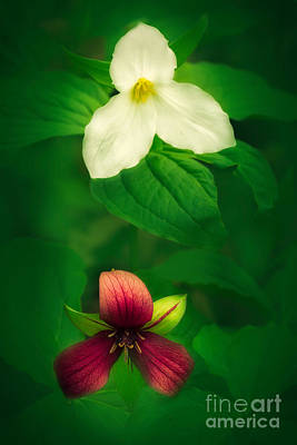 Red Trillium Photograph - Red And White by Todd Bielby