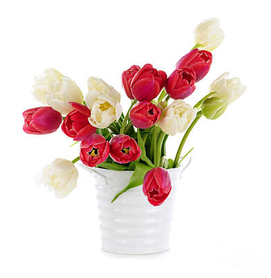 Bucket Photograph - Red And White Tulips by Elena Elisseeva