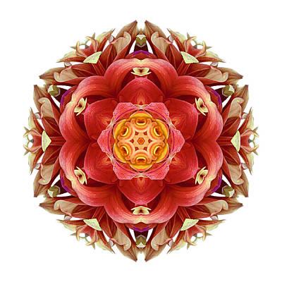 Photograph - Red And Yellow Dahlia IIi Flower Mandala Whtie by David J Bookbinder