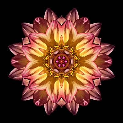 Photograph - Red And Yellow Dahlia Iv Flower Mandala by David J Bookbinder