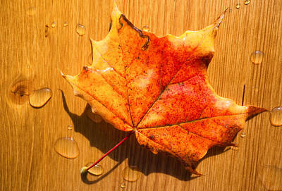 Photograph - Red And Yellow Fall Foliage On Brown Wood by Matthias Hauser