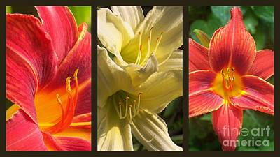 Photograph - Red And Yellow Lily Collage by Eunice Miller