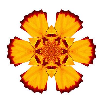 Photograph - Red And Yellow Marigold II Flower Mandala White by David J Bookbinder