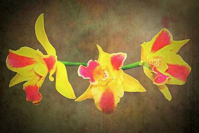 Photograph - Red And Yellow  Orchid by Rudy Umans