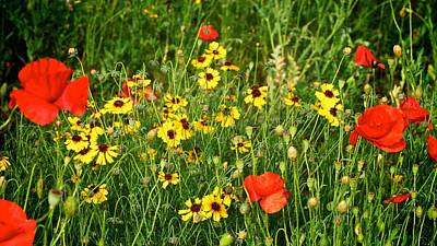 Photograph - Red And Yellow Wildflowers by Kristina Deane