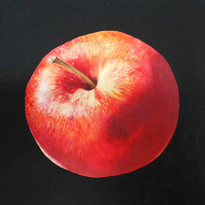 Watercolor Painting - Red Apple by Jean Yates