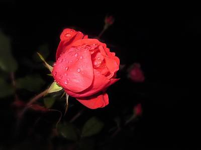 Photograph - Red At Night  by MTBobbins Photography