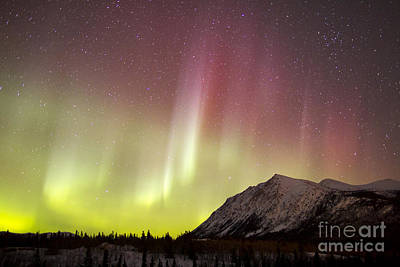 Photograph - Red Aurora Borealis Over Carcross by Joseph Bradley