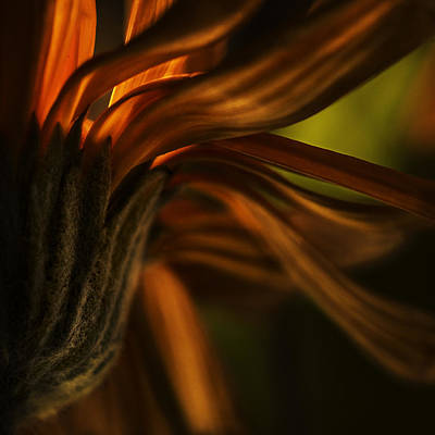 Art Print featuring the photograph Red Autumn Blossom Detail by Peter v Quenter