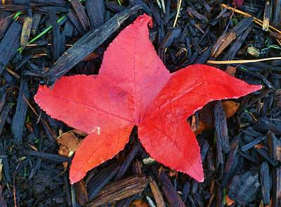 Art Print featuring the pyrography Red Autumn Leaf by P Dwain Morris