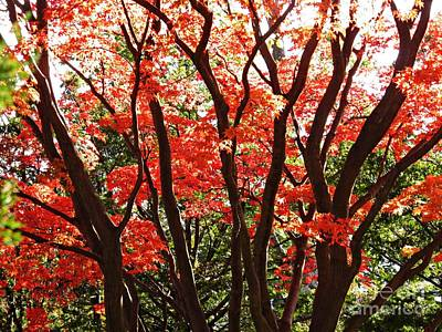 Photograph - Red Autumn by Sarah Loft