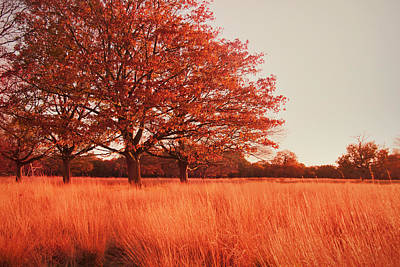 Autumn Landscape Photograph - Red Autumn by Violet Gray
