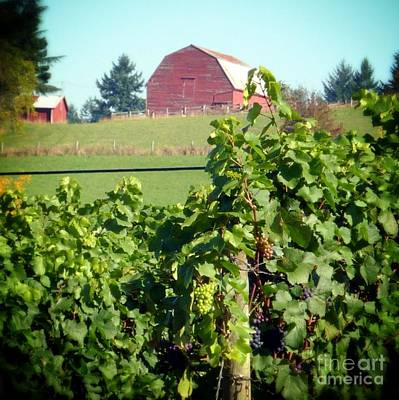 Photograph - Red Barn And Grapes by Susan Garren