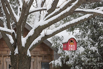 Red Barn Birdhouse On Tree In Winter Art Print