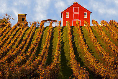 Wine Vineyard Photograph - Red Barn In Autumn Vineyards by Garry Gay