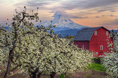 Scenic Photograph - Red Barn In Hood River Pear Orchard by David Gn