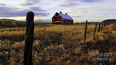 Red Barn In The Golden Field Art Print
