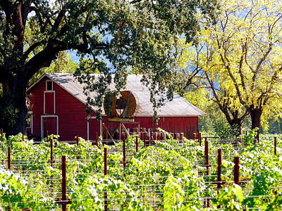 Photograph - Red Barn Oaks Vineyard by Jeff Lowe