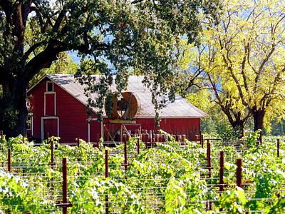Photograph - Red Barn Oaks Vineyard by Jeff Lowe