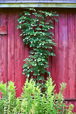 Photograph - Red Barn Wall by David Letts