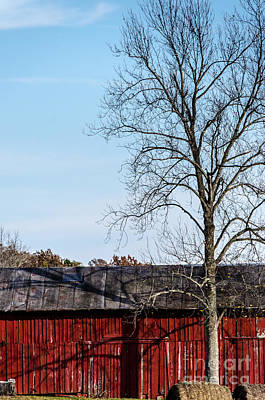 Photograph - Red Barn With Tree by Mary Carol Story