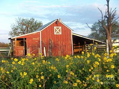 Red Barn With Wild Sunflowers Art Print