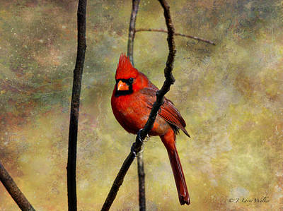 Digital Art - Red Beauty by J Larry Walker