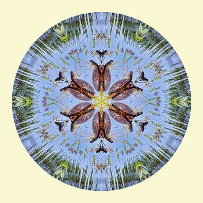 Photograph - Red Bellied Turtle Mandala by Beth Sawickie