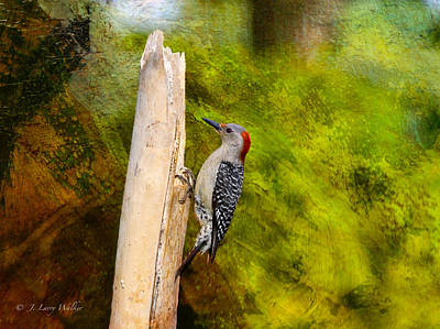 Digital Art - Red-bellied Woodpecker Happily Pecks by J Larry Walker