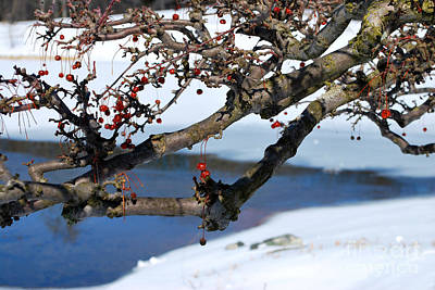 Red Berries And Branches In The Snow Art Print by Nancy Mueller
