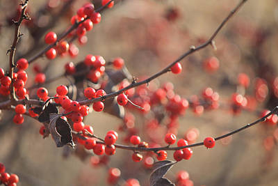 Photograph - Red Berries In Autumn by Annette Gendler