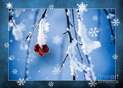 Photograph - Red Berries In Winter by Cindy Singleton