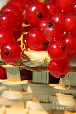 Red Berries Original