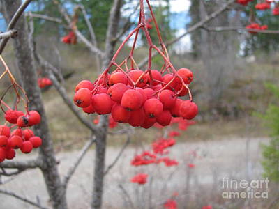 Photograph - Red Berries by Leone Lund