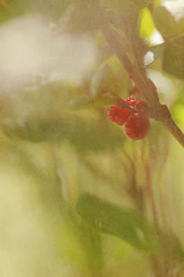 Red Berries Of The Bog Cranberry Art Print by Roberta Murray