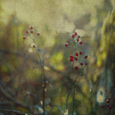 Red Berries On Green After Frost Art Print