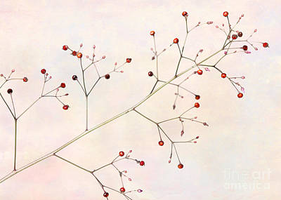 Photograph - Red Berries by Sabrina L Ryan