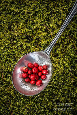 Red Berries Silver Spoon Moss Art Print by Edward Fielding
